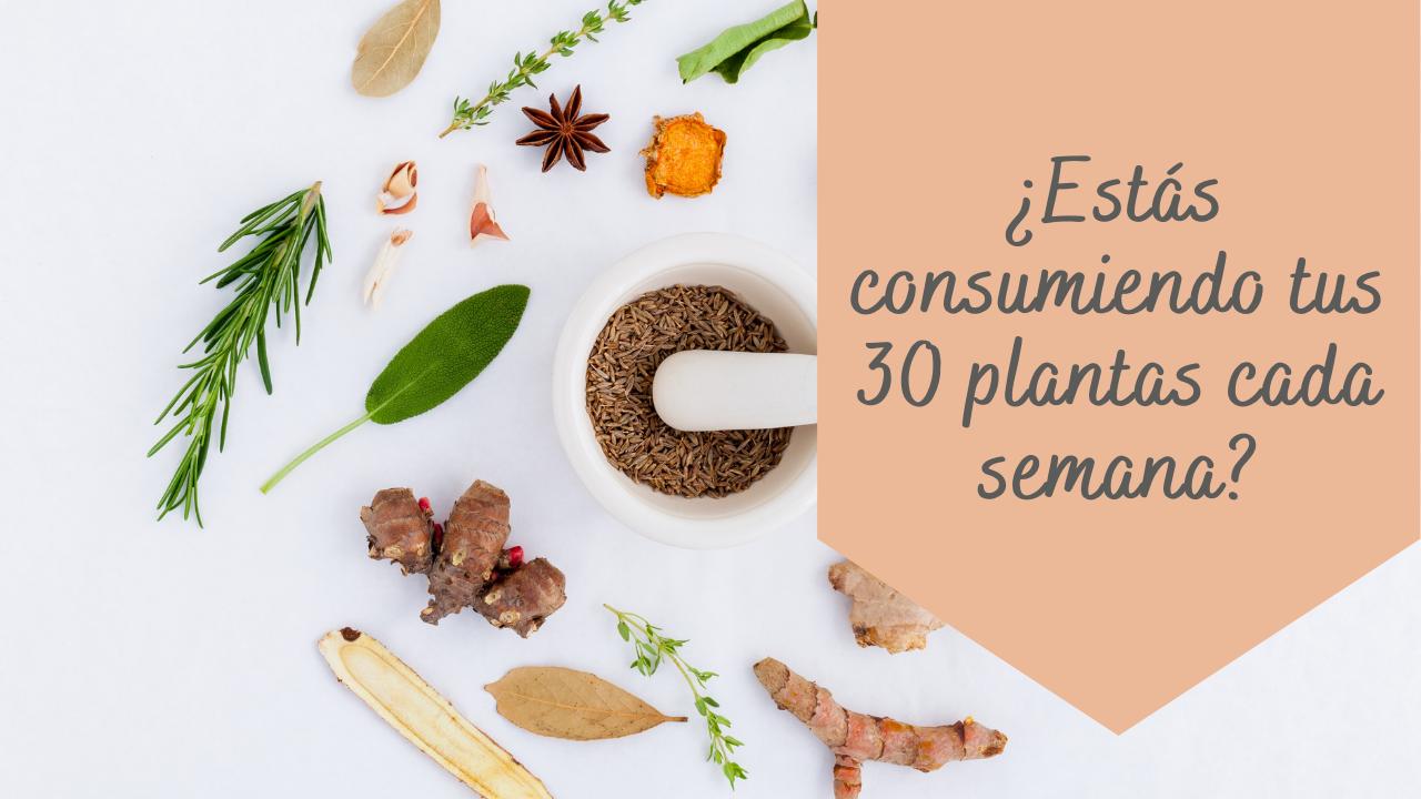 blog-30-plantas.png